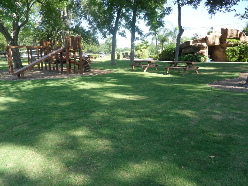 Celebration Bermuda Grass Unruh Turf Farm Texas
