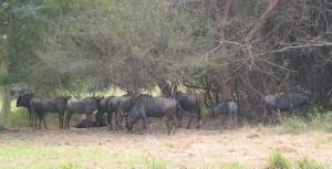 Nyala Park