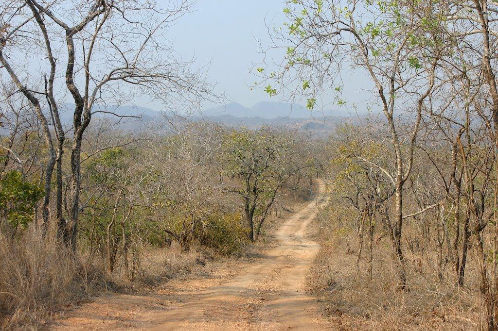 Road in Majete park